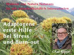 Webinar: Adaptogene - erste Hilfe bei Stress und Burn-out