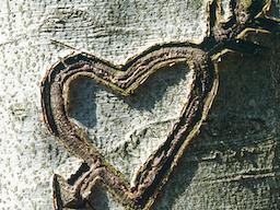 Webinar: Heilpflanzen für das Herz  - Seelenorgan und Sonne im Menschen