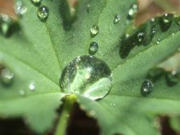 Webinar: Pflanzenhormone und hormonell regulierende Heilpflanzen